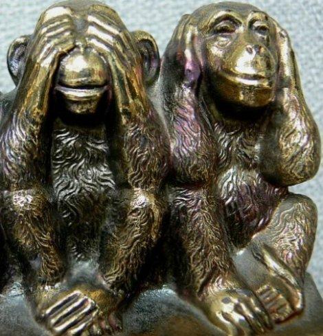 monkeys wisopinion_com