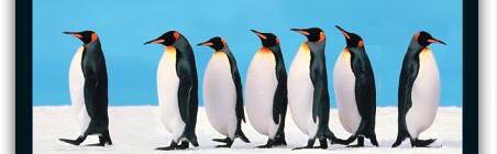 Leadership Penguins
